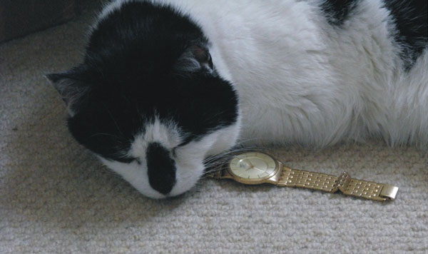 cat Monti is testing Marc watch
